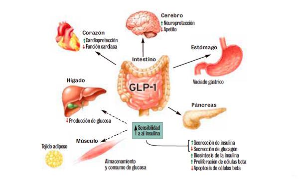 Glandula que provoca un aumento de glucosa en la sangre
