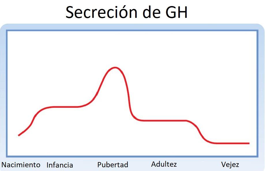 glandula+que+controla+los+niveles+de+azucar+en+la+sangre